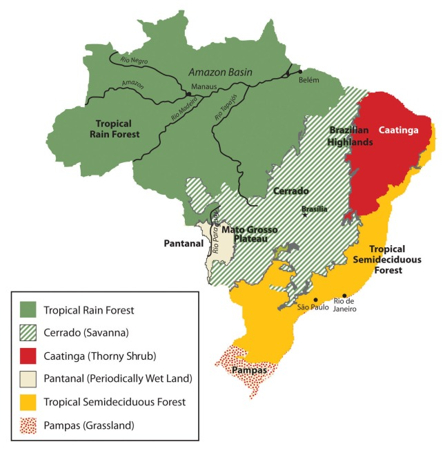 Natural Vegetation of Brazil